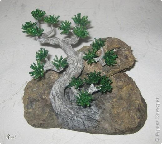 Ещё один бонсай , наверное, в скалах :))) фото 2