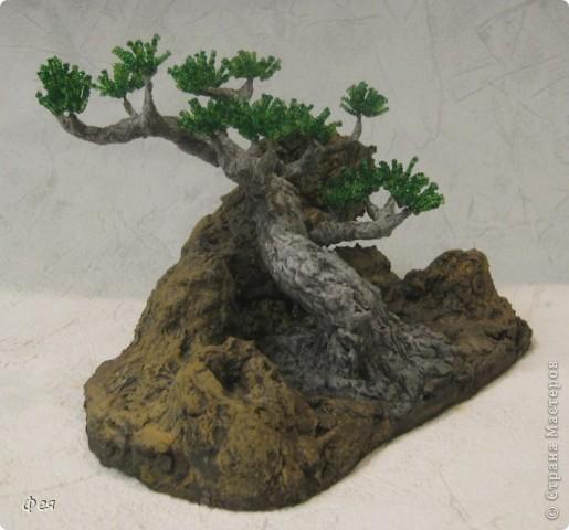 Ещё один бонсай , наверное, в скалах :))) фото 3