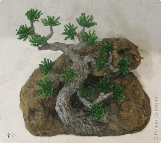 Ещё один бонсай , наверное, в скалах :))) фото 4
