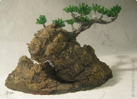 Ещё один бонсай , наверное, в скалах :))) фото 5