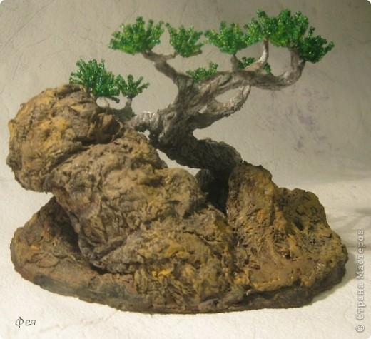 Ещё один бонсай , наверное, в скалах :))) фото 6