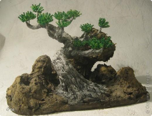 Ещё один бонсай , наверное, в скалах :))) фото 1