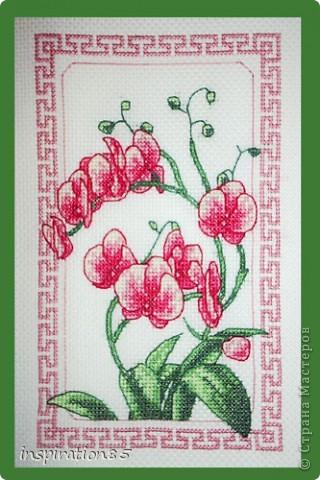Афродита цветов - орхидея