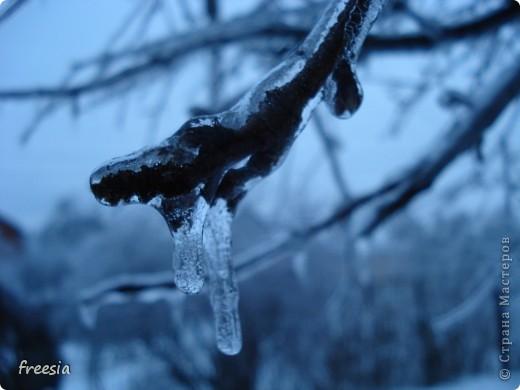 Замороженные в декабре фото 2