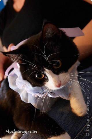 Кот Плюха с хомячкой МыЩью фото 12