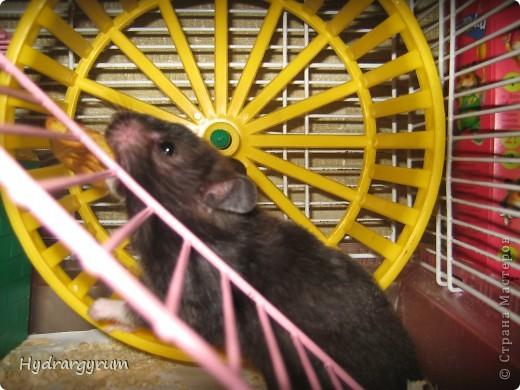 Кот Плюха с хомячкой МыЩью фото 2