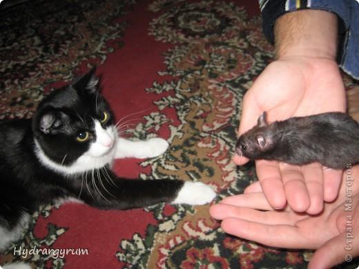 Кот Плюха с хомячкой МыЩью фото 1