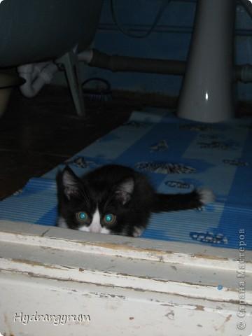 Кот Плюха с хомячкой МыЩью фото 4