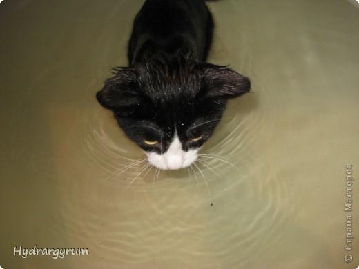 Кот Плюха с хомячкой МыЩью фото 5