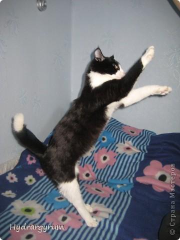 Кот Плюха с хомячкой МыЩью фото 7