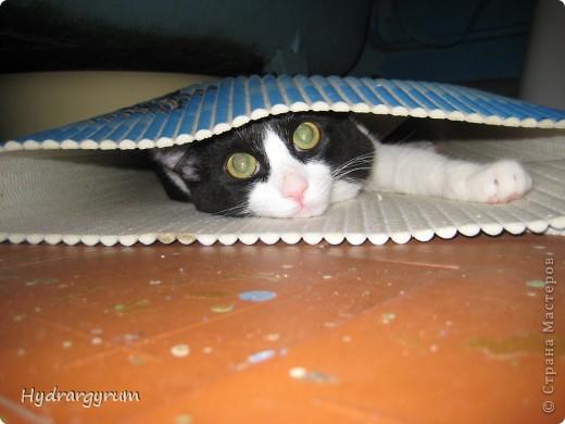 Кот Плюха с хомячкой МыЩью фото 10
