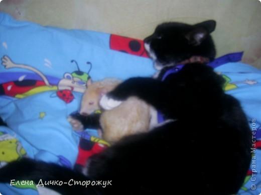 """Моя дочь """"уговорила"""" кошку сфотографироваться вместе с Маней фото 1"""