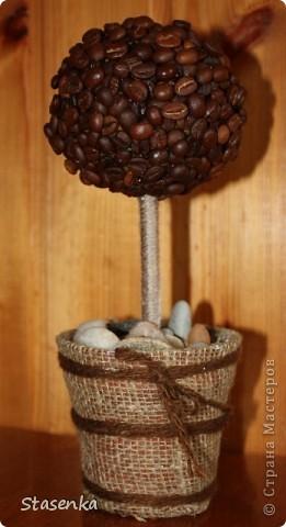 Вот и я посадила кофейное дерево.