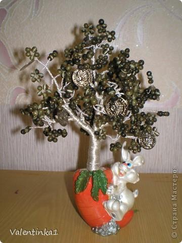 Денежные деревья  фото 1