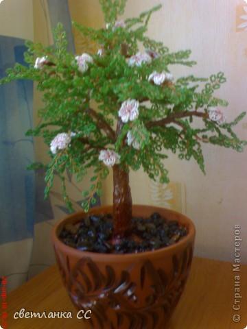 весеннее деревце фото 1