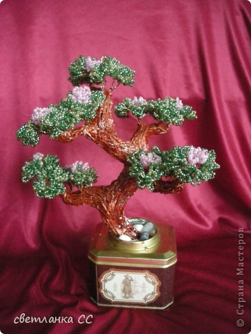 цветущий бонсайчик в подарок фото 1