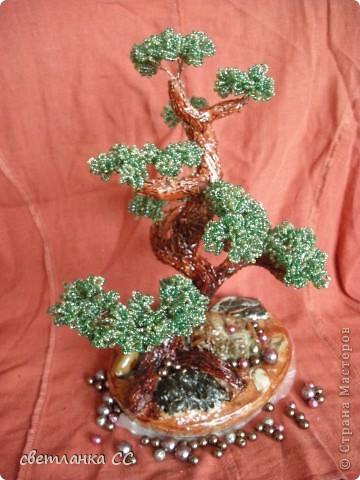 цветущий бонсайчик в подарок фото 2