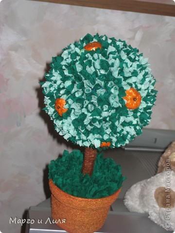 Апельсиновое дерево фото 1