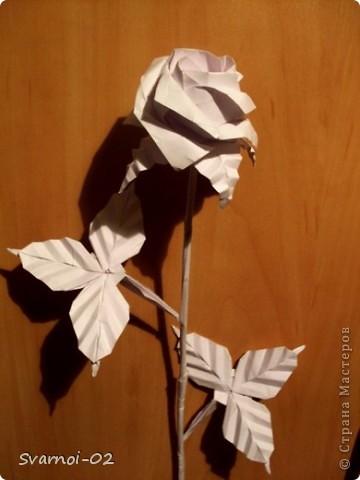 Роза в полном комплекте!!! фото 1