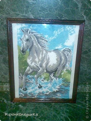 моя лошадка!