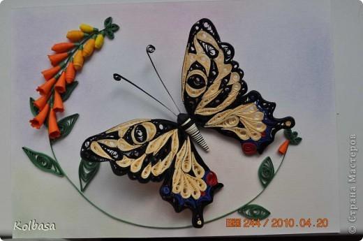 Квиллинг Еще бабочка Бумага