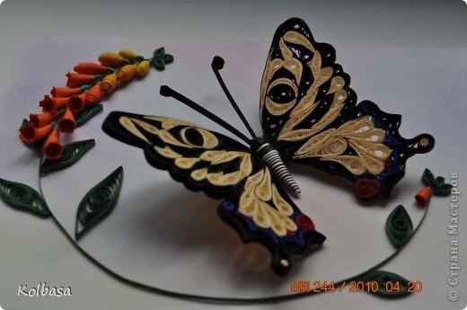 Еще бабочка фото 2