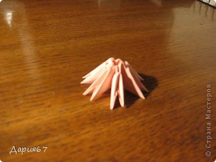 Растущий мухоморчик фото 7