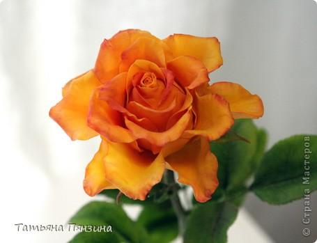 роза радости