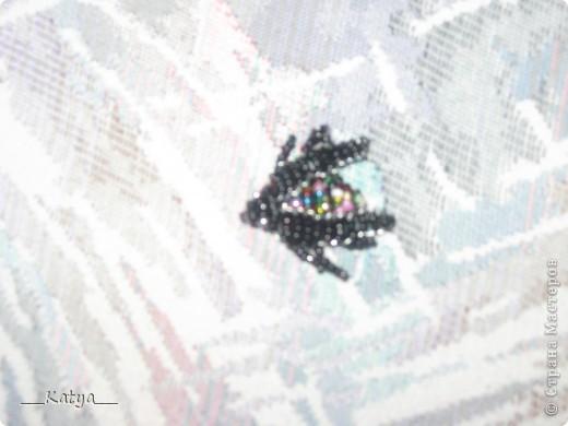 Пёстрый жук) фото 1
