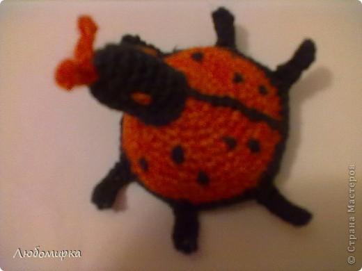 Божья коровка. Связана крючком. Верхняя часть туловища оранжевая с черными точками, выпуклая; нижняя часть, чёрная - плоский круг. На голове усики и вышитые глазки. Наполнитель - синтепон(вата)  фото 1