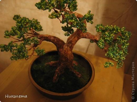 Давно хотела сделать бисерное дерево, насмотревшись на прекрасные работы мастериц, вот что вышло. Это мой первый опыт в бисероплетении. фото 2