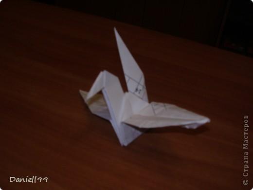 ворона(каркающая) фото 2