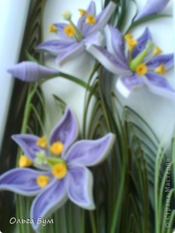 Болотные цветочки. Эти цветочки мне самой очень по душе. Мне не часто в квиллинге нравится то, что я делаю. Вот думаю, сделать их вырастающими из рамки? И не класть мох.  фото 5