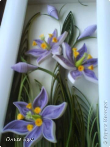 Болотные цветочки. Эти цветочки мне самой очень по душе. Мне не часто в квиллинге нравится то, что я делаю. Вот думаю, сделать их вырастающими из рамки? И не класть мох.  фото 6