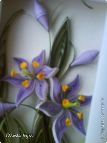 Болотные цветочки. Эти цветочки мне самой очень по душе. Мне не часто в квиллинге нравится то, что я делаю. Вот думаю, сделать их вырастающими из рамки? И не класть мох.  фото 7