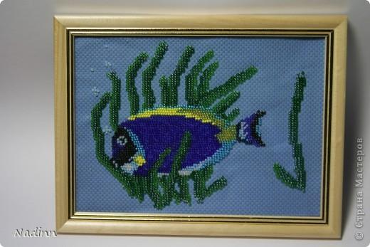 """Вышивка  """"Рыбка """" Бисероплетение.  Страна мастеров.  Автор."""