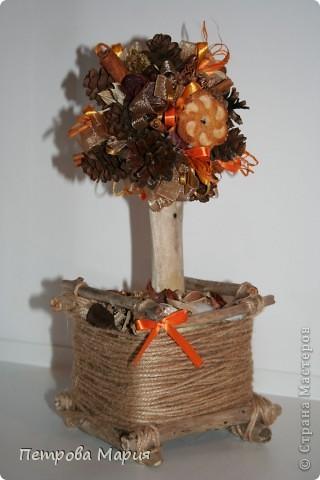 Мандариновое дерево фото 7