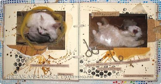 Альбом про кота! фото 3