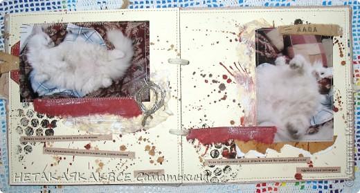Альбом про кота! фото 5