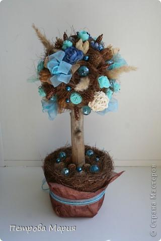 Мандариновое дерево фото 11
