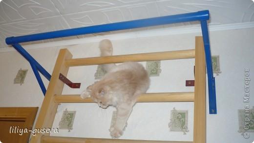 Вот первые шаги Филимона к вершинам спорта. фото 3