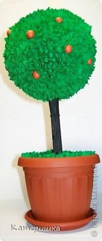 первое деревце
