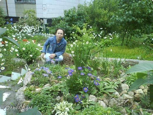 Простите, если не по теме выкладываю или не там. Но сегодня  увидела Клематисы у СИПОЛИК и так захотелось цветов!!! решилась, наконец, выложить аватар, хотя не люблю себя на фото, но я там сбочка от прекрасного куста клематиса!!! Это мои любимые цветы и все они растут ... около моего подъезда(!), так как дачи нет. А душа просит! Вот сажаю где могу уже 7 лет. Сейчас эти фото согревают душу и вдохновляют на творчество. фото 6
