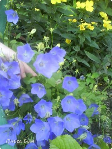 Простите, если не по теме выкладываю или не там. Но сегодня  увидела Клематисы у СИПОЛИК и так захотелось цветов!!! решилась, наконец, выложить аватар, хотя не люблю себя на фото, но я там сбочка от прекрасного куста клематиса!!! Это мои любимые цветы и все они растут ... около моего подъезда(!), так как дачи нет. А душа просит! Вот сажаю где могу уже 7 лет. Сейчас эти фото согревают душу и вдохновляют на творчество. фото 21