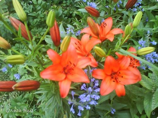 Простите, если не по теме выкладываю или не там. Но сегодня  увидела Клематисы у СИПОЛИК и так захотелось цветов!!! решилась, наконец, выложить аватар, хотя не люблю себя на фото, но я там сбочка от прекрасного куста клематиса!!! Это мои любимые цветы и все они растут ... около моего подъезда(!), так как дачи нет. А душа просит! Вот сажаю где могу уже 7 лет. Сейчас эти фото согревают душу и вдохновляют на творчество. фото 19