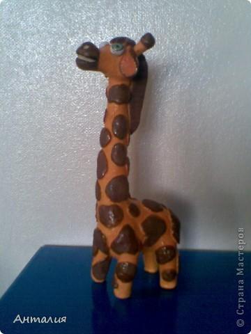 это мой жирафик фото 1