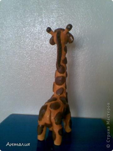 это мой жирафик фото 2