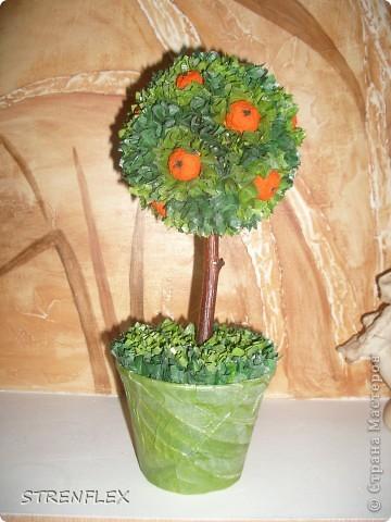 Это римейк первого моего апельсиновенького деревца.http://stranamasterov.ru/node/74242 После первого всем моим незамужним подругам срочно понадобились такие деревья. Вот пришел черед первой из них. Дерево уже подарено на день рождения! Именинница страшно довольна. фото 2
