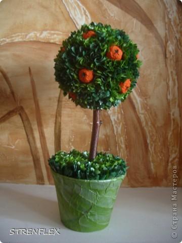 Это римейк первого моего апельсиновенького деревца.http://stranamasterov.ru/node/74242 После первого всем моим незамужним подругам срочно понадобились такие деревья. Вот пришел черед первой из них. Дерево уже подарено на день рождения! Именинница страшно довольна. фото 3