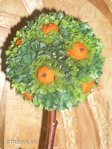 Это римейк первого моего апельсиновенького деревца.http://stranamasterov.ru/node/74242 После первого всем моим незамужним подругам срочно понадобились такие деревья. Вот пришел черед первой из них. Дерево уже подарено на день рождения! Именинница страшно довольна. фото 6